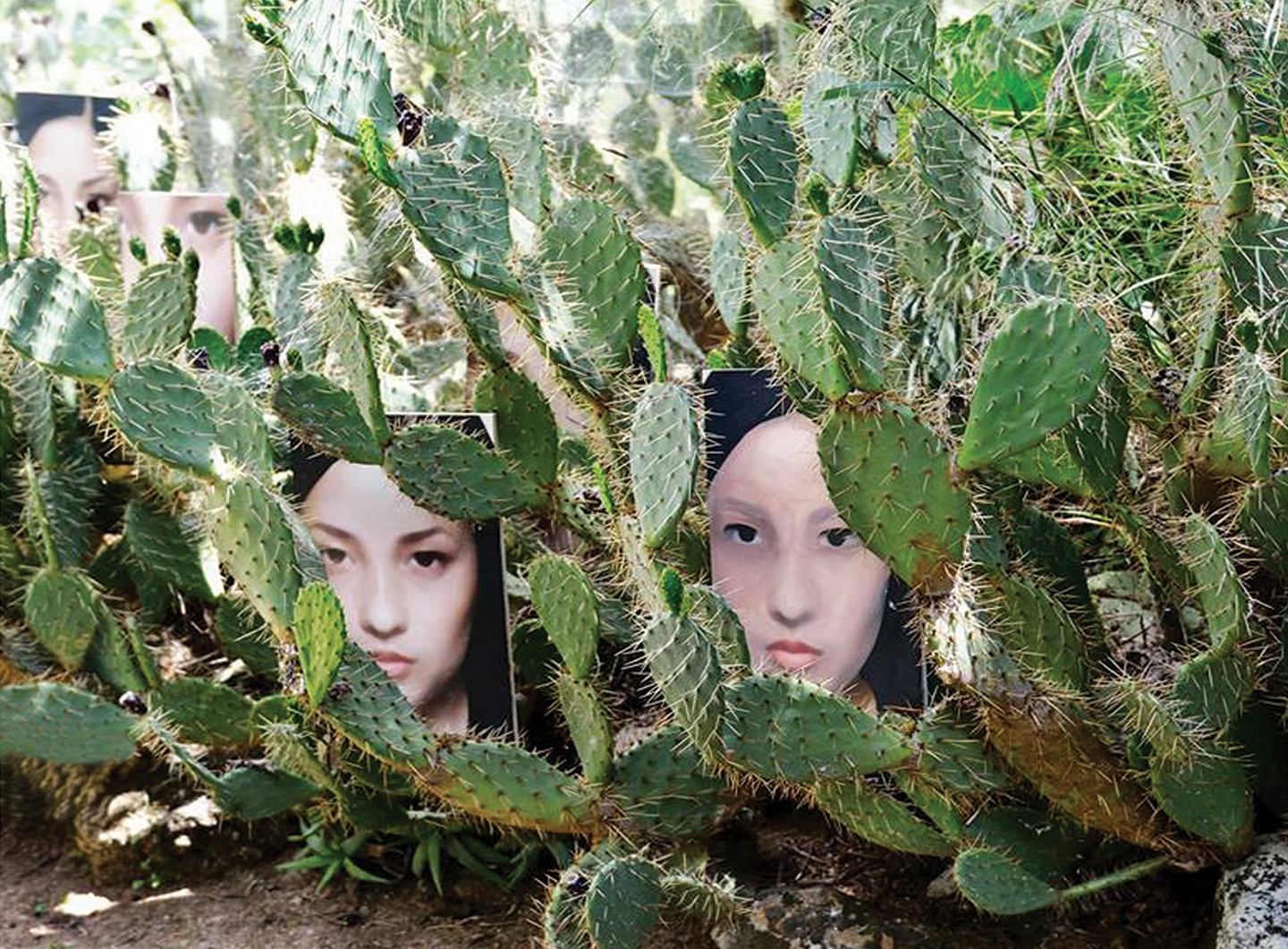 Guillermina De Gennaro, Neonature, installation, tempera on wood, 30x42cm, each, cactus, environmental dimensions, 2014.